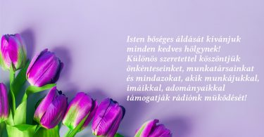 purple-tulips-flowers-light-pink-background_1600x900.jpg