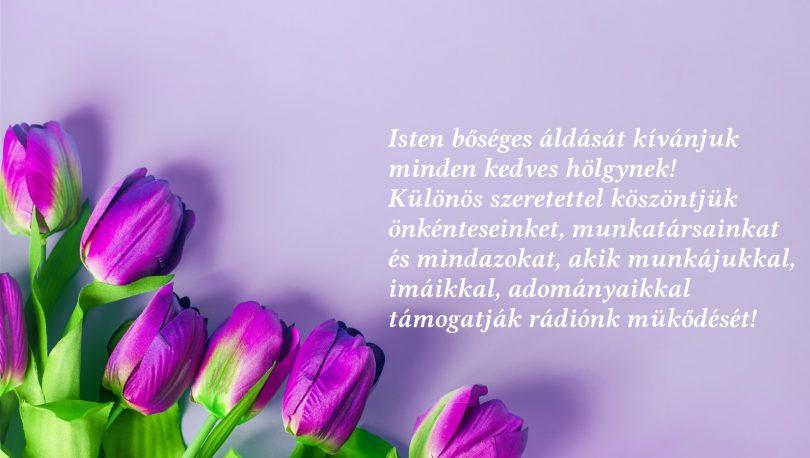 purple-tulips-flowers-light-pink-background_1600x900.jpg